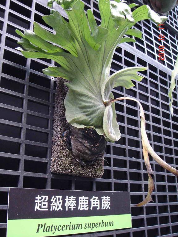 美的饗宴~ 2010國際花博在台北 (part 2)