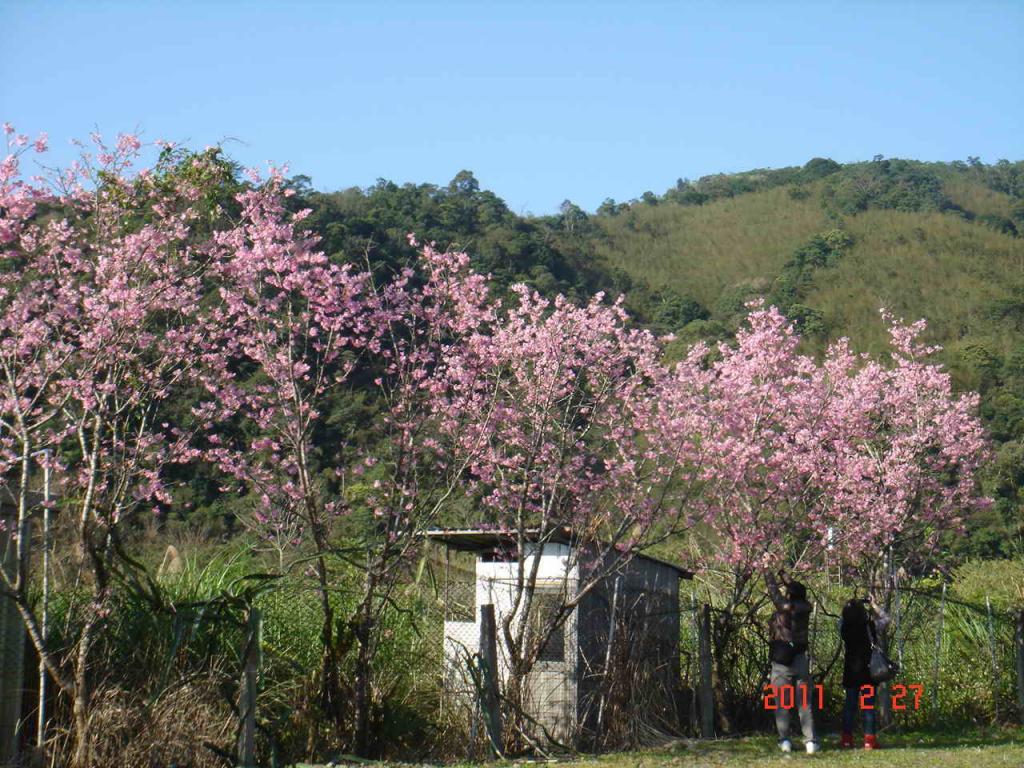<台灣風景線上> 北橫明珠, 高山湖泊~~明池之旅