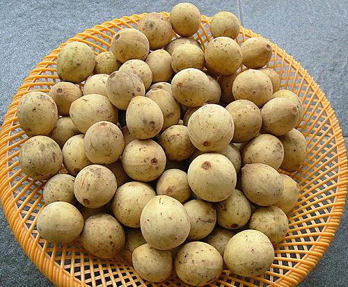 介绍一种我很喜欢的水果-度古兰刹(duku langsa)
